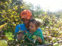 Daniel Little and Aly Benoit pick apples together during a family outing at the Happy Apple orchard earlier this season. Photo by Megan Miras.